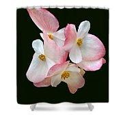 Begonia Flower Gems Shower Curtain