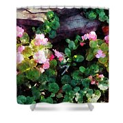 Begonias By Stone Wall Shower Curtain