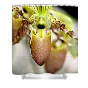 Beige Lady Slipper Orchids Shower Curtain