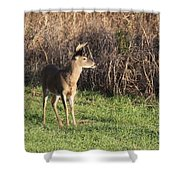 Being Aware - Deer Shower Curtain
