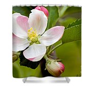 Being Fruitful Shower Curtain