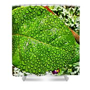 Bejewelled By Rain  Shower Curtain