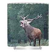 Bellowing Red Deer Stag Shower Curtain