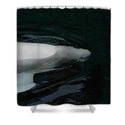 Beluga Impressions 3 Shower Curtain