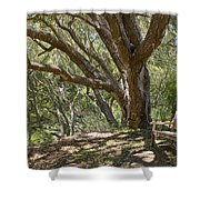 Bench And Tree In Cambria II Shower Curtain
