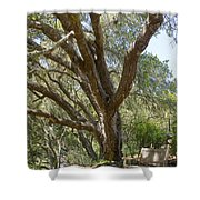 Bench And Tree In Cambria Shower Curtain