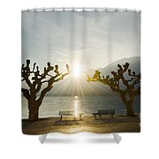 Benches And Trees On The Lakefront Shower Curtain