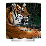 Bengal Tiger - Teeth Shower Curtain
