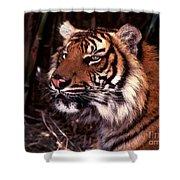 Bengal Tiger Watching Prey Shower Curtain