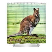 Bennets Wallaby  Shower Curtain