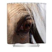 Benson Mule Days Shower Curtain