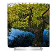 Bent Tree Shower Curtain