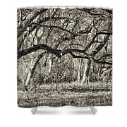 Bent Trees Sepia Toned Shower Curtain