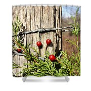 Berries And Barbs Shower Curtain