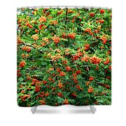 Berries In Profusion Shower Curtain