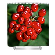 Berry Brilliant Shower Curtain