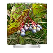 Berry Pretty Shower Curtain