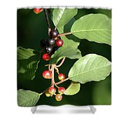 Berry Stages Shower Curtain