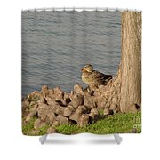 Bethany Lakes Duck Shower Curtain