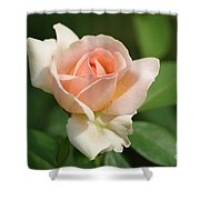 Betty White Rose Shower Curtain