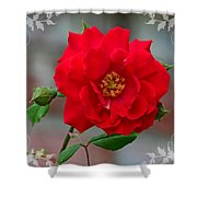 Betty's Red Rose Shower Curtain
