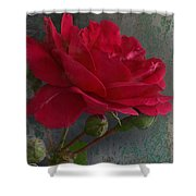 Betty's Red Rose II With Decorations Shower Curtain