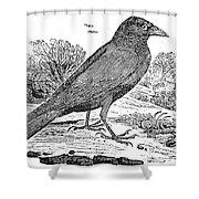 Bewick: Raven Shower Curtain by Granger