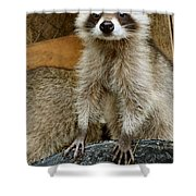 Big And Tall Shower Curtain