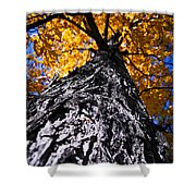 Big Autumn Tree In Fall Park Shower Curtain