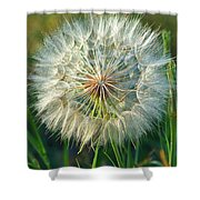 Big Dandelion Seed Shower Curtain