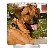 Big Dog Shower Curtain