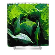 Big Green Cabbage Shower Curtain