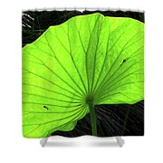 Big Leaf Shower Curtain