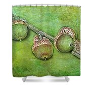 Big Oaks From Little Acorns Grow Shower Curtain by Judi Bagwell