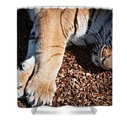 Big Paws Shower Curtain