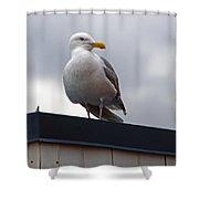 Big Seagull Shower Curtain