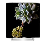Big Sedum Shower Curtain