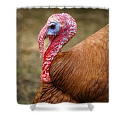Big Turkey Shower Curtain