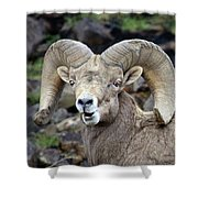 Bighorn Giant Shower Curtain