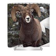 Bighorn Sheep, Maligne Canyon, Jasper Shower Curtain