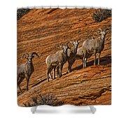 Bighorn Sheep, Zion National Park, Utah Shower Curtain