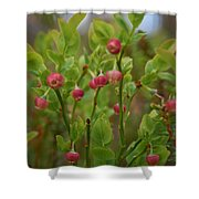 Bilberry Flowers Shower Curtain