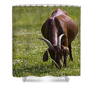 Billy Goat Or Nanny Goat  Shower Curtain