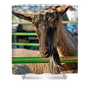 Billy The Ham Shower Curtain