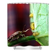 Biocontrol Of Bean Beetle Shower Curtain