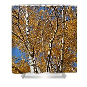 Birch Beauty Shower Curtain