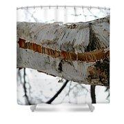Birch Damaged In Ice Storm Shower Curtain
