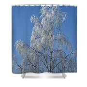 Birch In Frost. Shower Curtain