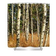 Birch Tree Abstract Shower Curtain