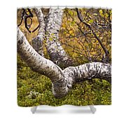 Birch Trees In Autumn Foliage Shower Curtain